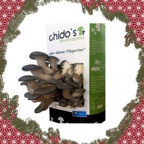 2. Dezember: Chido's frische Pilze